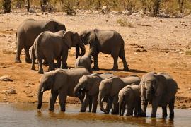 Proč v červenci do Namibie?