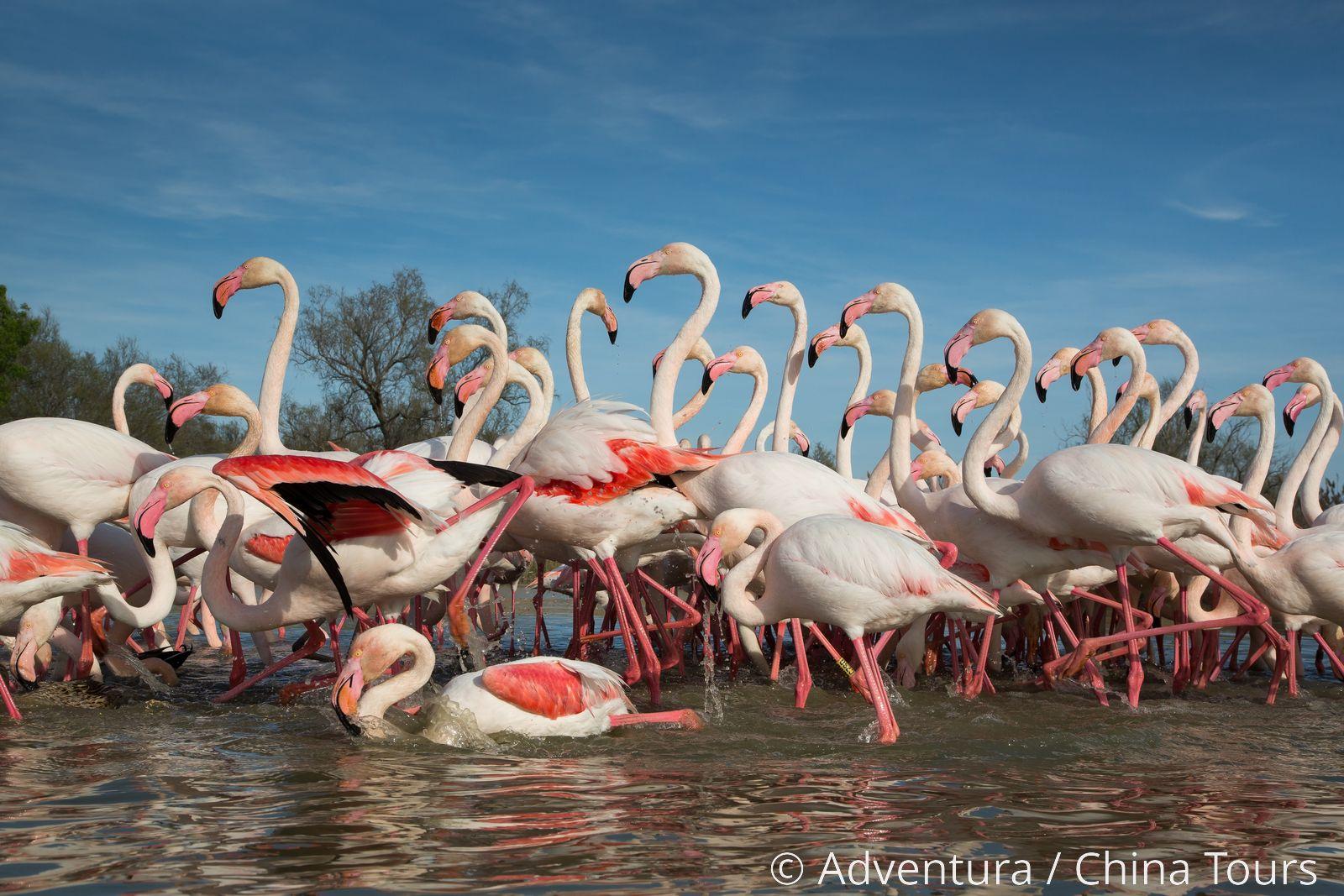 aea04dbeea80 Národní park Camargue - Adventura.cz - poznávací dovolená, turistika,  dovolená na kole