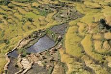 Terasovitá rýžová políčka v okolí Górky