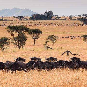 Pakoně v Serengeti, Tanzanie