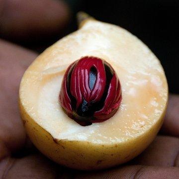 Zanzibar, muškátový oříšek a muškátový květ, Tanzanie