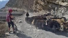 Cesta údolím Kalí Gandakí