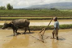 Filipínský venkov